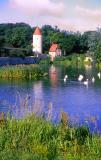 les cygnes de l'étang , Dinkelsbühl