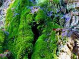 cascade de mousse