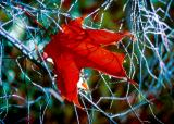 la feuille dans les branches