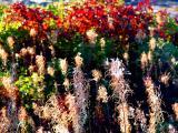 soubresault d'automne