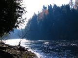 l'arbre au bord de la rivière