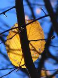 la feuille accrochée à la branche
