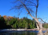 La rivière Montmorency et l'arbre mort