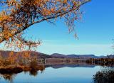 le mélèze du lac Delage
