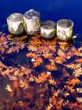 les feuilles mortes et les quatre troncs