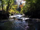 le ruisseau du zoo
