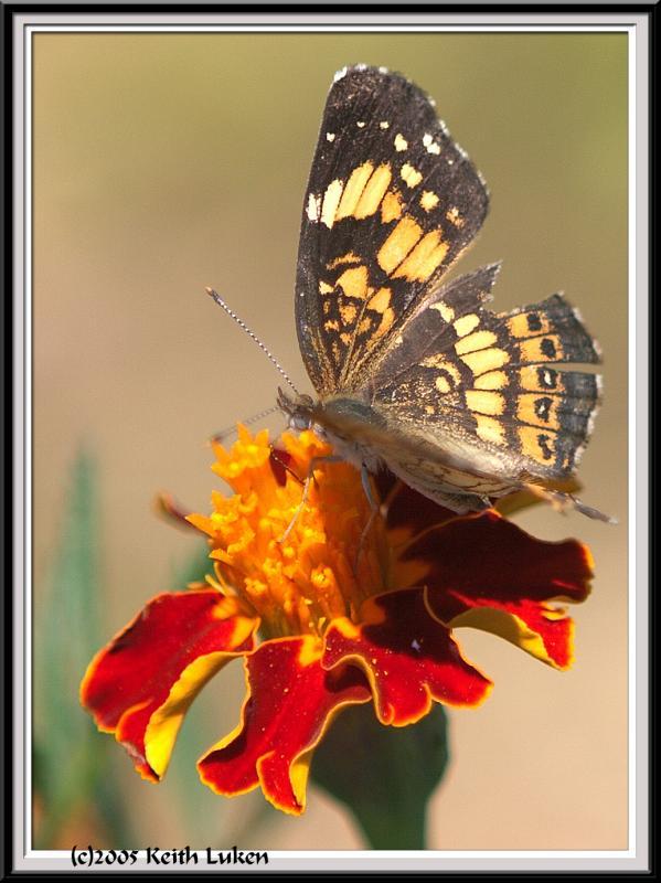 State Botanical Garden - IMG_3231 Crop.jpg