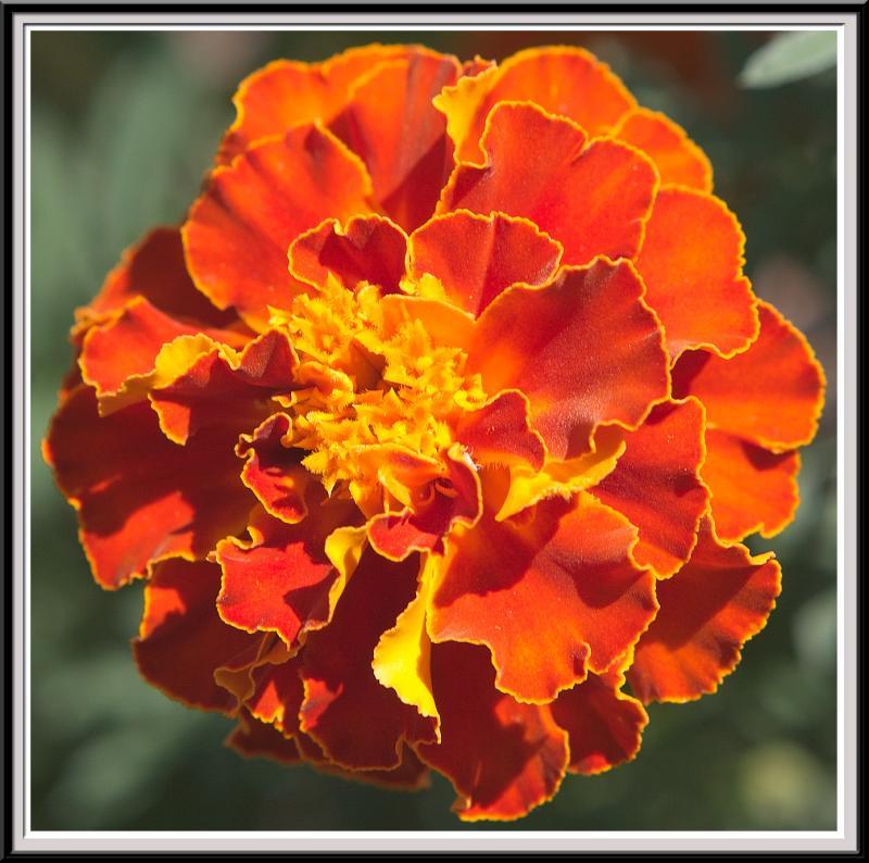 State Botanical Garden - IMG_3262 Crop.jpg