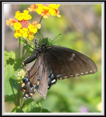 State Botanical Garden - IMG_3211.jpg