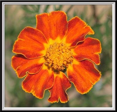 State Botanical Garden - IMG_3227 Crop.jpg