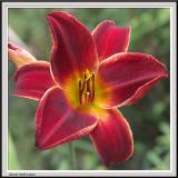 Cypress Gardens - IMG_2140.jpg