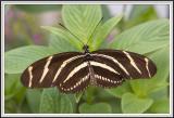 Cypress Gardens - IMG_2190.jpg