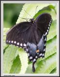Cypress Gardens - IMG_2196 - Crop.jpg