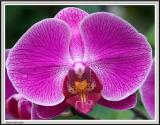Cypress Gardens - IMG_2197 - Crop.jpg