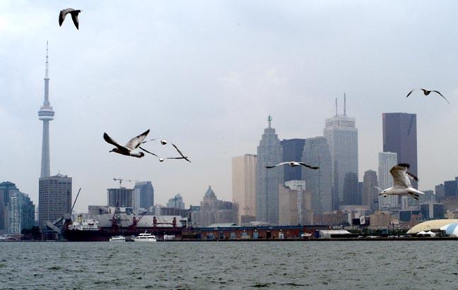 Toronto skyline with birds