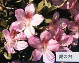 'Misu-no-uchi'