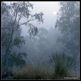 *** Lowlights, Dawn and Fog ***