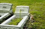 Pittsburgh Cemeteries