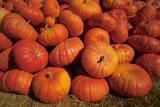A Day of Pumpkins