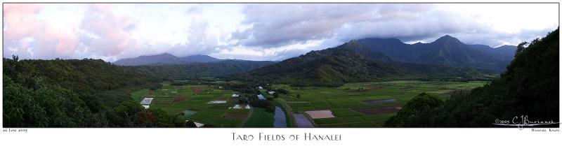 01July05 Hanalei Taro Fields Panoramic