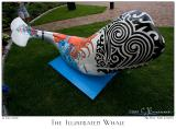 The Illustrated Whale - 3326