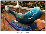 Whale Riders - 3528