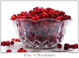 29July05alt Wineberries - 4387