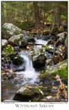 17Oct05 Woodland Stream - 6351