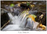 17Oct05 Fall Stream - 6352