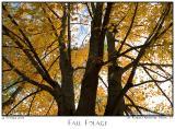 24Oct05 Fall Folage - 6866