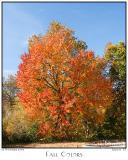 03Nov05 Fall Colors 7100 + 7102