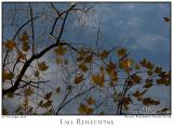 05Nov05 Fall Reflections - 7152