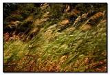 Warm wind blowing grass