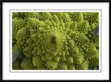 Romanesco coliflower
