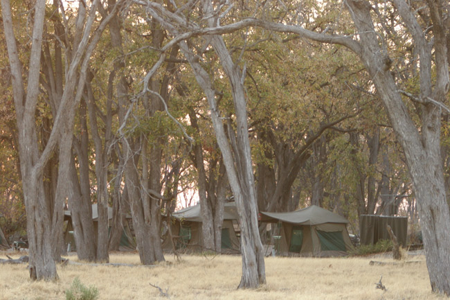 Photo of our mobile camp in Botswana, Africa - trip report inside here (scroll down)