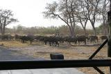 Other people found the same herd