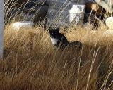 ranger_kitty.jpg