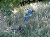 Abandoned aka Gone to Seed
