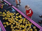Lilli picks a duck.jpg
