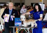 Dandie Dinmont - Asheville Kennel Club
