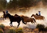 Hooves & Dust 4