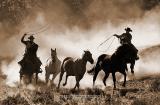 Hooves & Dust 14