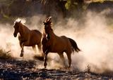 Hooves & Dust 16