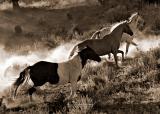 Hooves & Dust 8