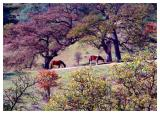 Relaxed Horses