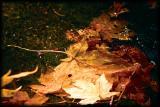 Leaves on Fern Spring