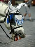 Prague: Horse Laugh