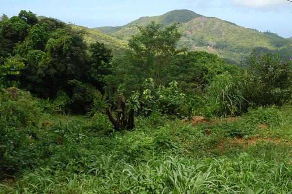 Chemin Dame Le Roi, Mahé Island