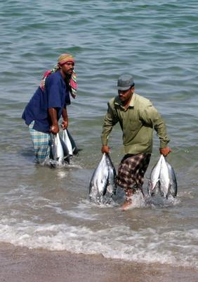 Fisherman bringing the catch ashore