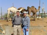 Brian & Roy, Al Ain Camel Market